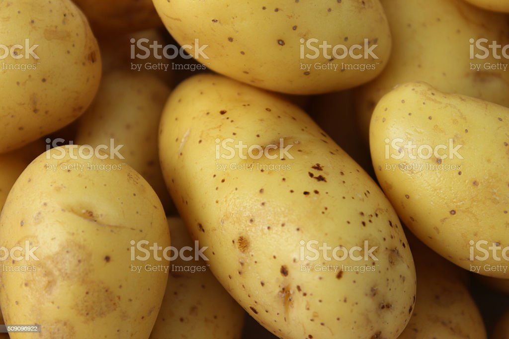 Image of washed and scrubbed pile of Belana new potatoes stock photo