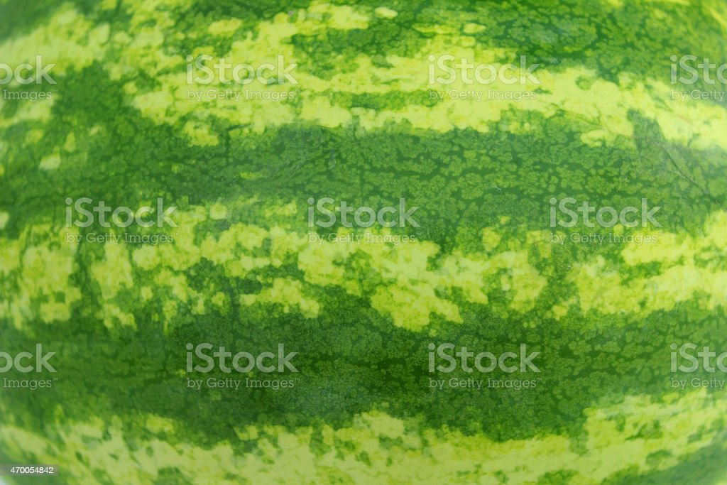 Image of watermelon skin stripes, green melon rind outside fruit stock photo