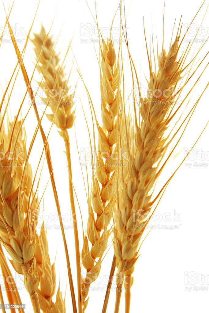 Image of wheat isolated over white background royalty-free stock photo