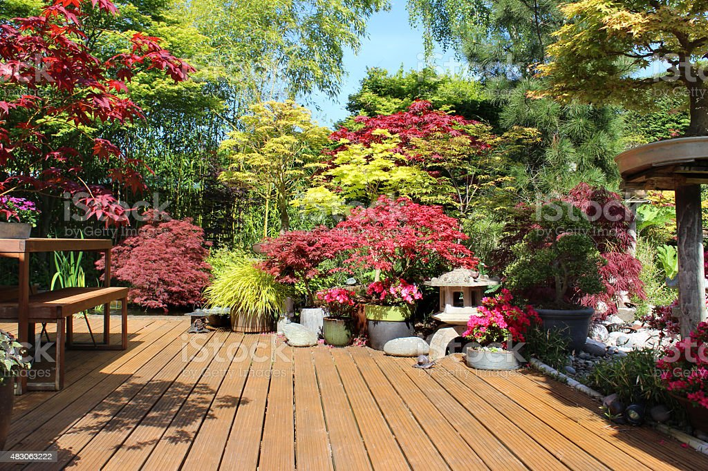 Image of wooden deck with potted plants, Japanese maples / acers stock photo