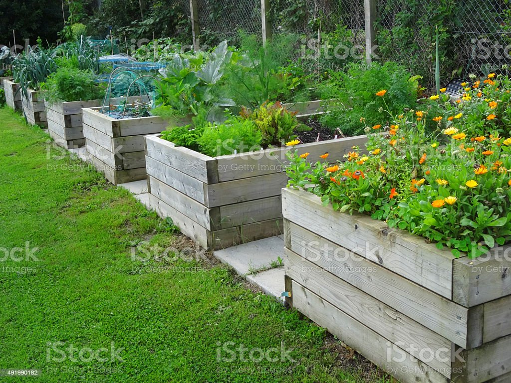Image of wooden raised beds with marigolds, vegetables, railway sleepers stock photo