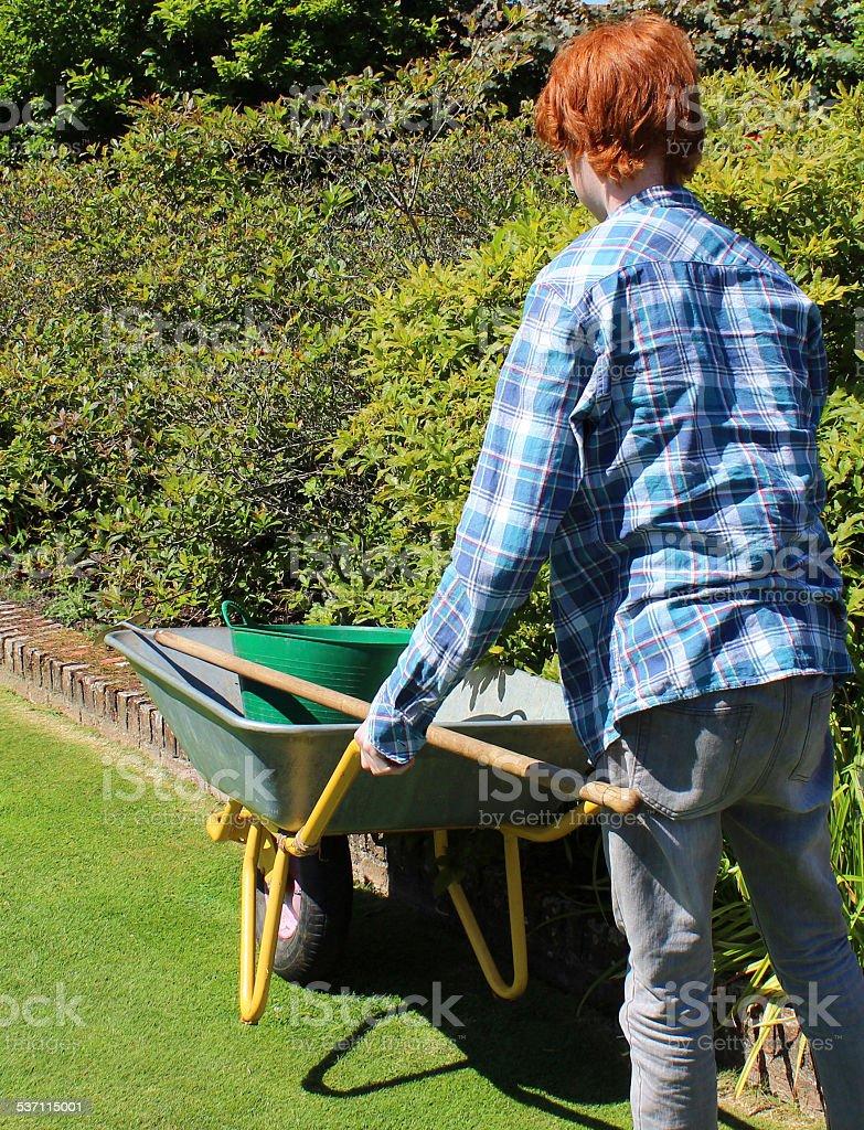 Image of young gardener pushing wheelbarrow, boy gardening, green lawn stock photo