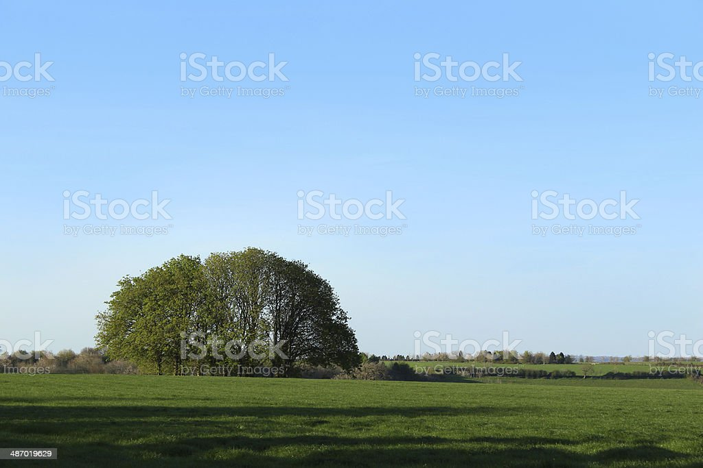 Image showing a small group / copse of horse chestnut trees stock photo