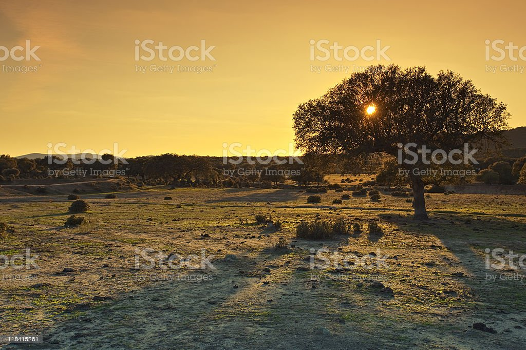 Image with Cokin filter of a golden sunset royalty-free stock photo