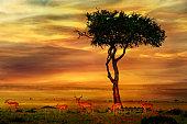 Impala at African Sunset Background