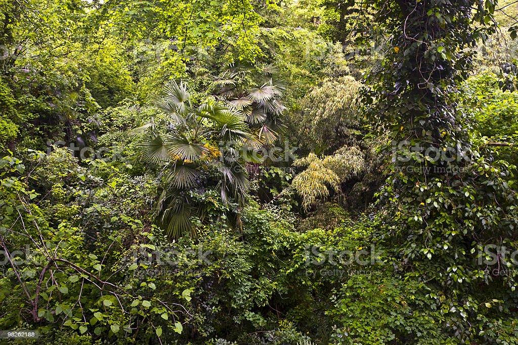 Impenetrable jungle. stock photo