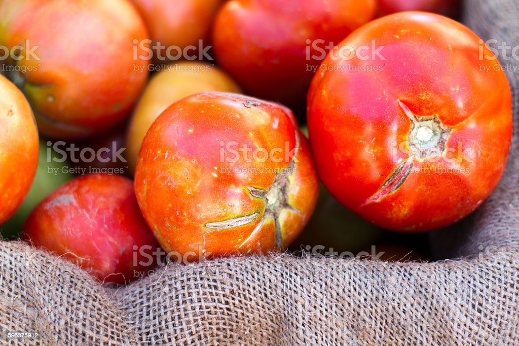 Imperfect Beautiful Heirloom Tomatoes in Burlap at Farmers Market stock photo