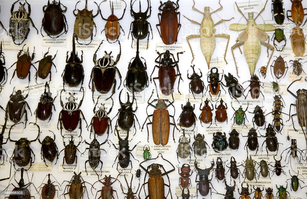 important collections of insects and beetles with Scarabs 2 royalty-free stock photo
