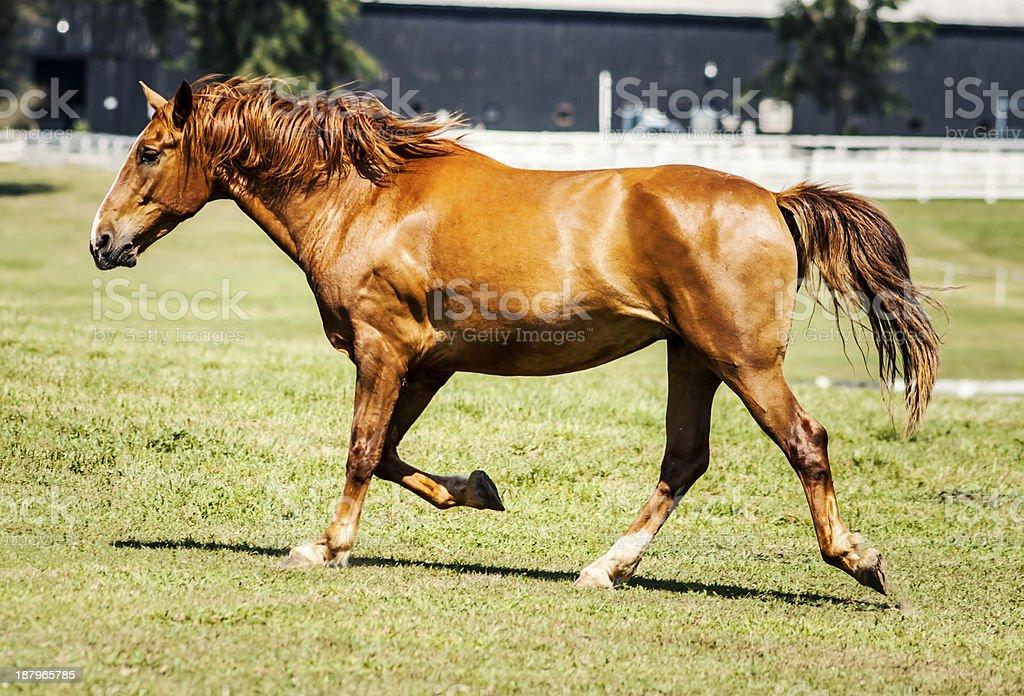 Imposing stallion stock photo