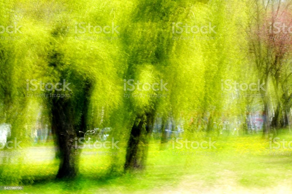 impression in the green stock photo