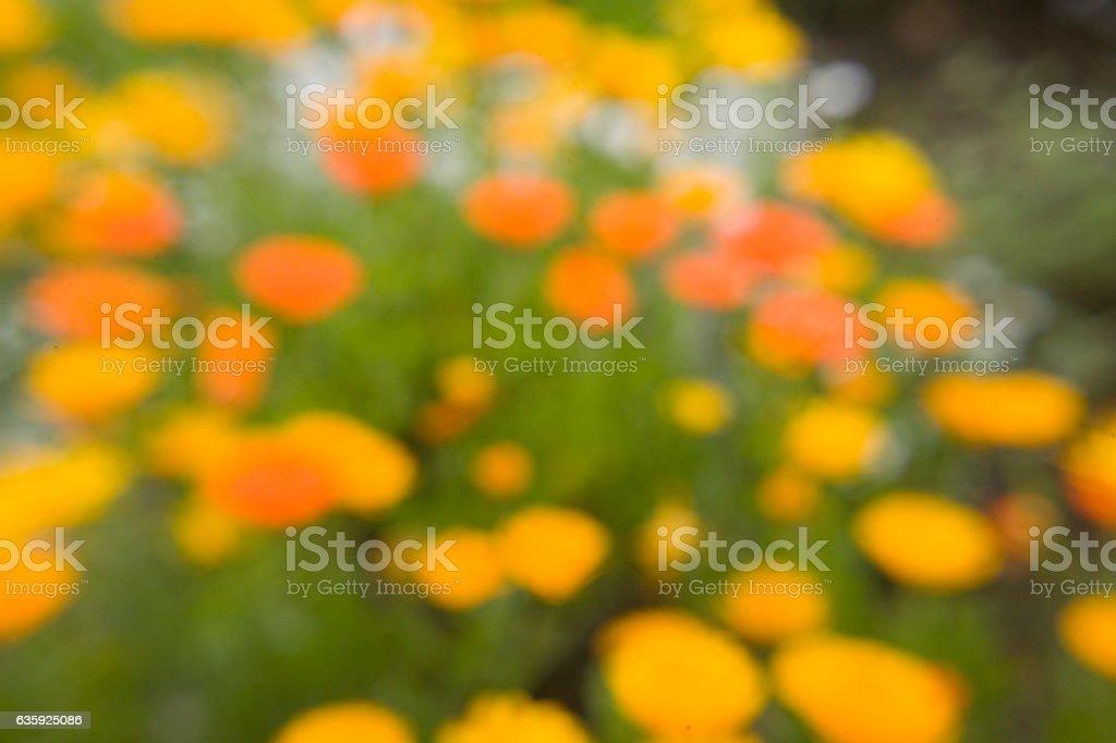 Impression of Poppies stock photo