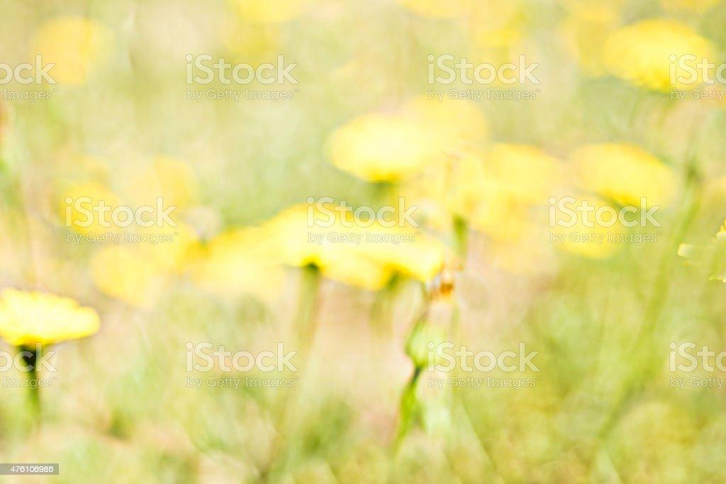 Impressionista campo amarelo.   Bucólicas fundo foto royalty-free