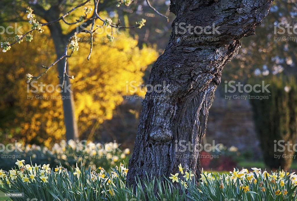 Impressions of spring in a domestic garden royalty-free stock photo