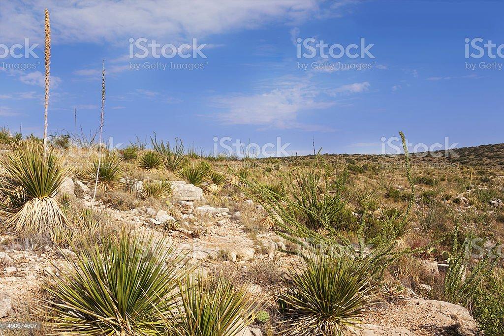 Impressive and scenic landscape in New Mexico stock photo