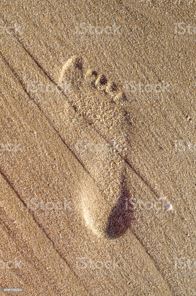 Imprint barefoot child feet in the sand stock photo