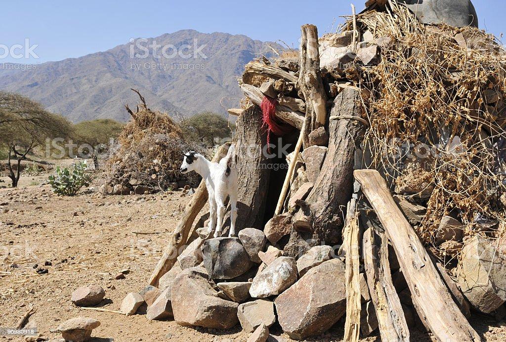 Improvised Goat Shed, Eritrea stock photo
