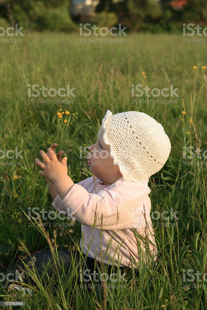 in a grass royalty-free stock photo