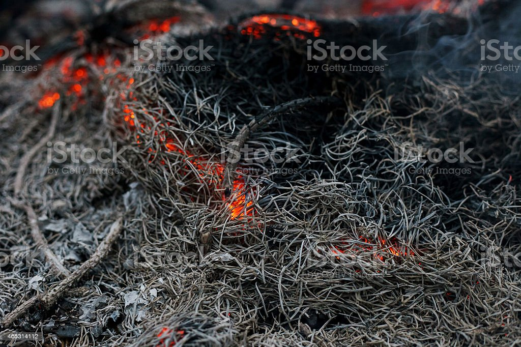 in a pine forest fire burning branches and trees macro stock photo