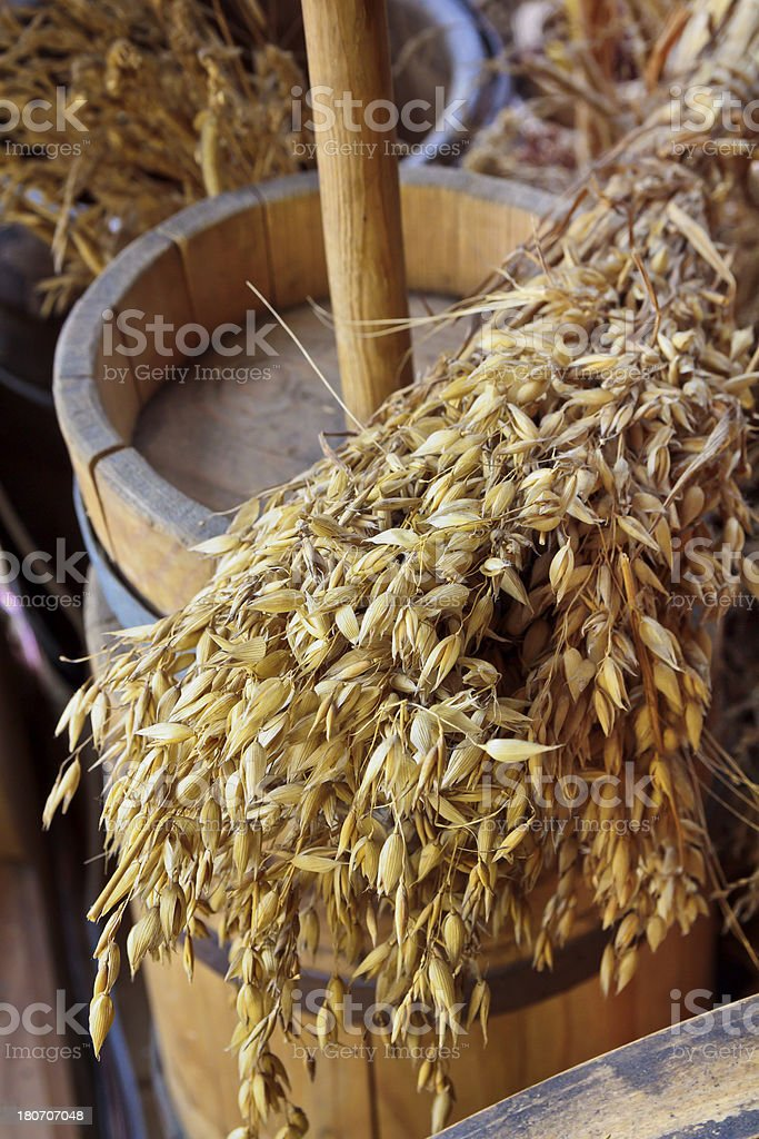 In a rural barn royalty-free stock photo
