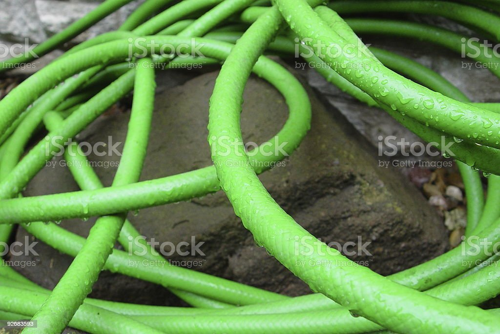 In a Tangle! royalty-free stock photo