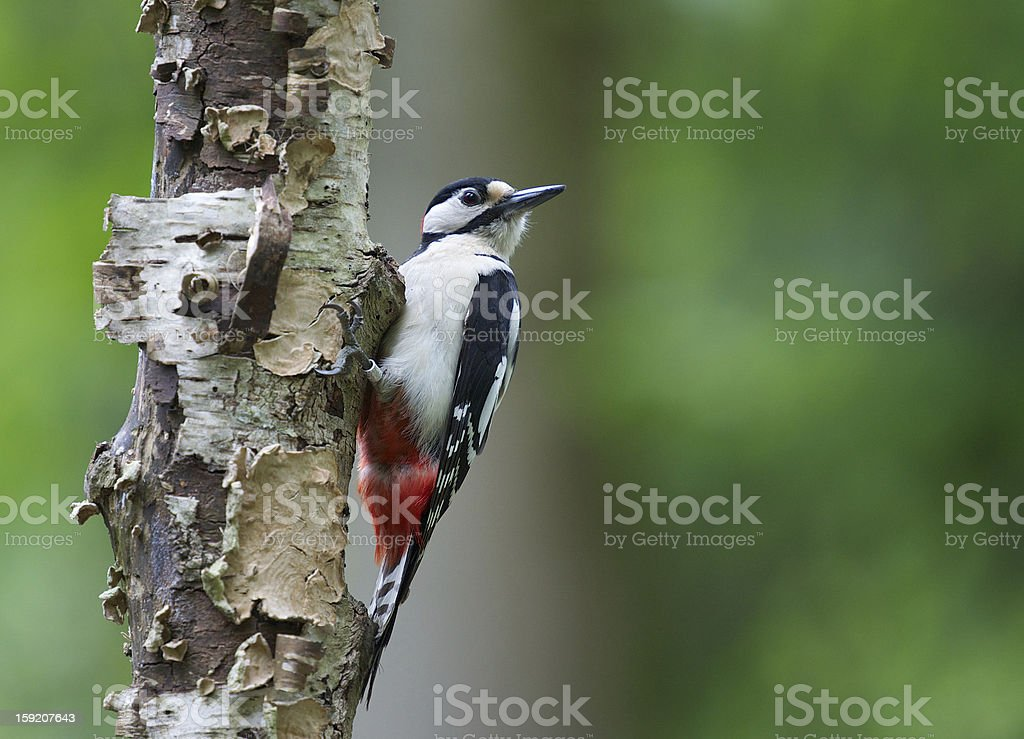 In a tree royalty-free stock photo
