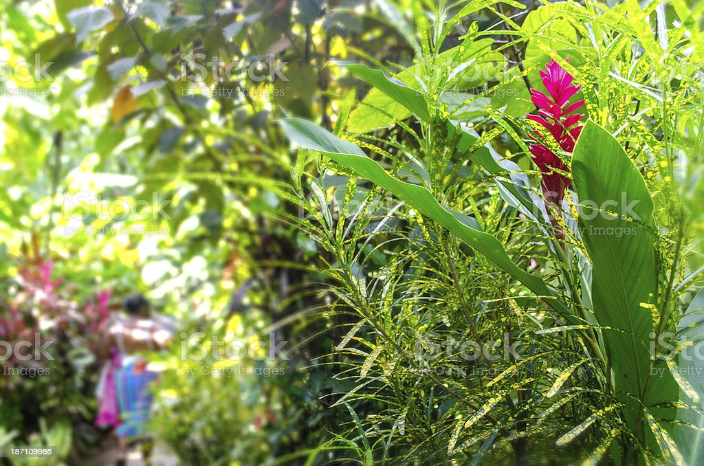 in a tropical garden stock photo