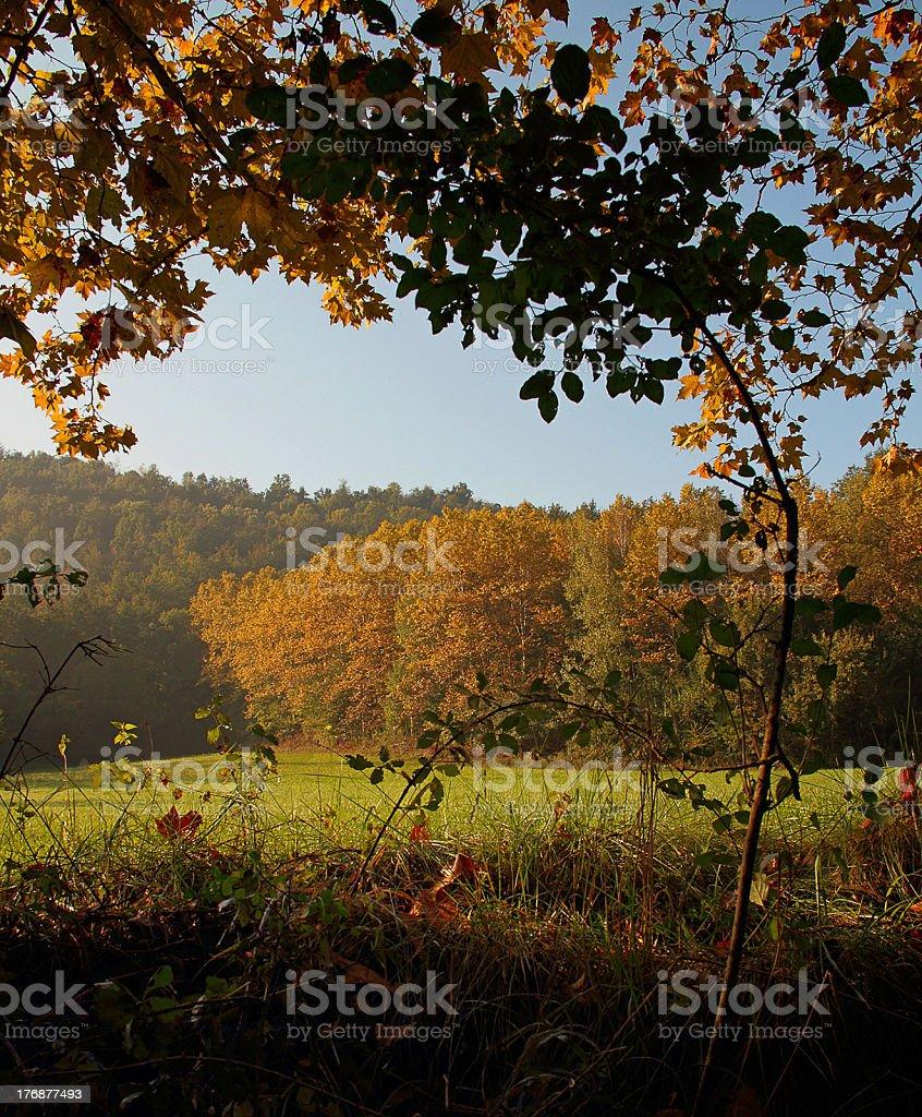 In autumn royalty-free stock photo