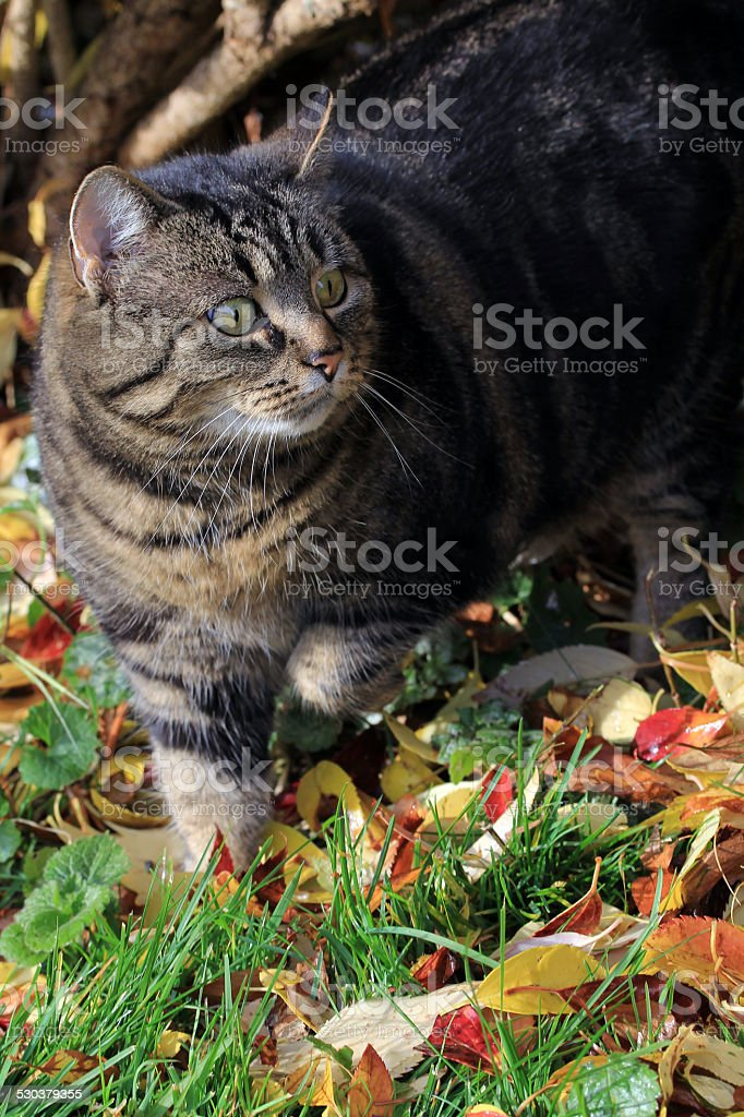 in autumn stock photo