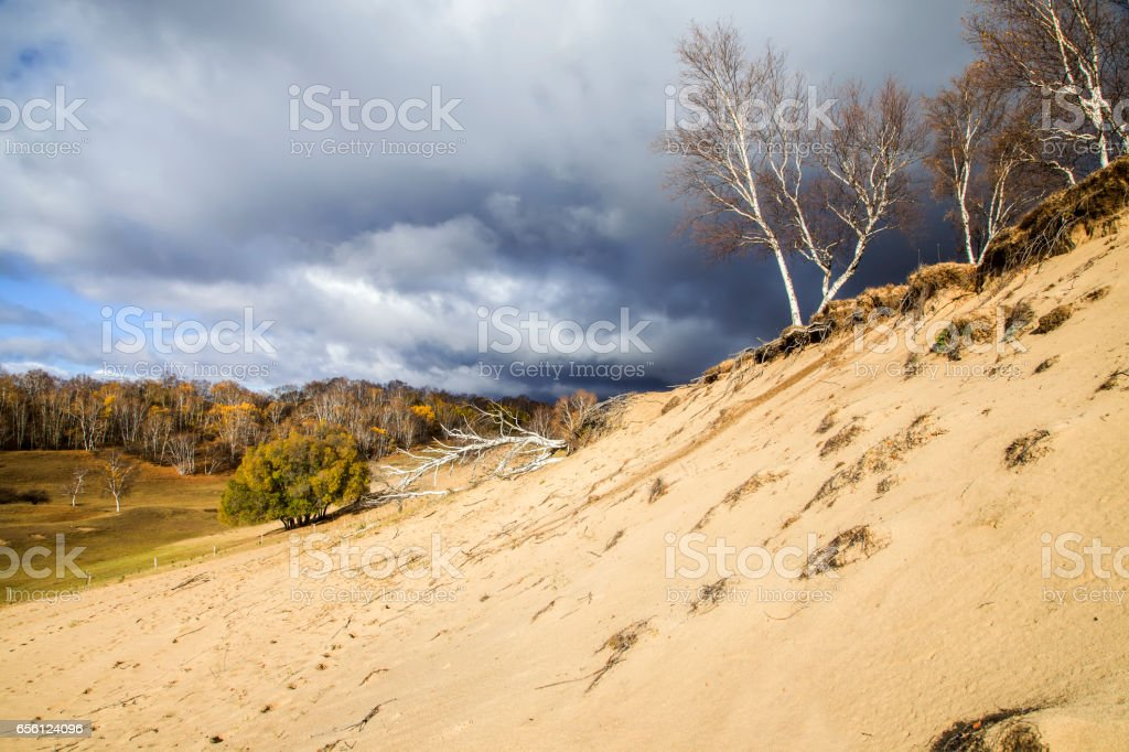 In autumn, trees on the hillside stock photo