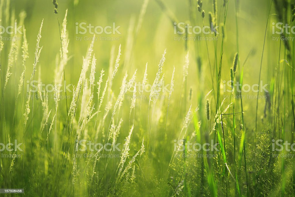 In dawn light royalty-free stock photo