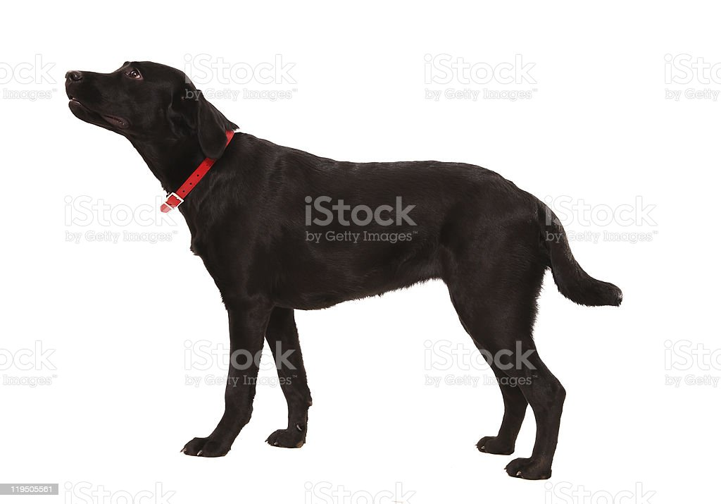 In expectation of commands stock photo