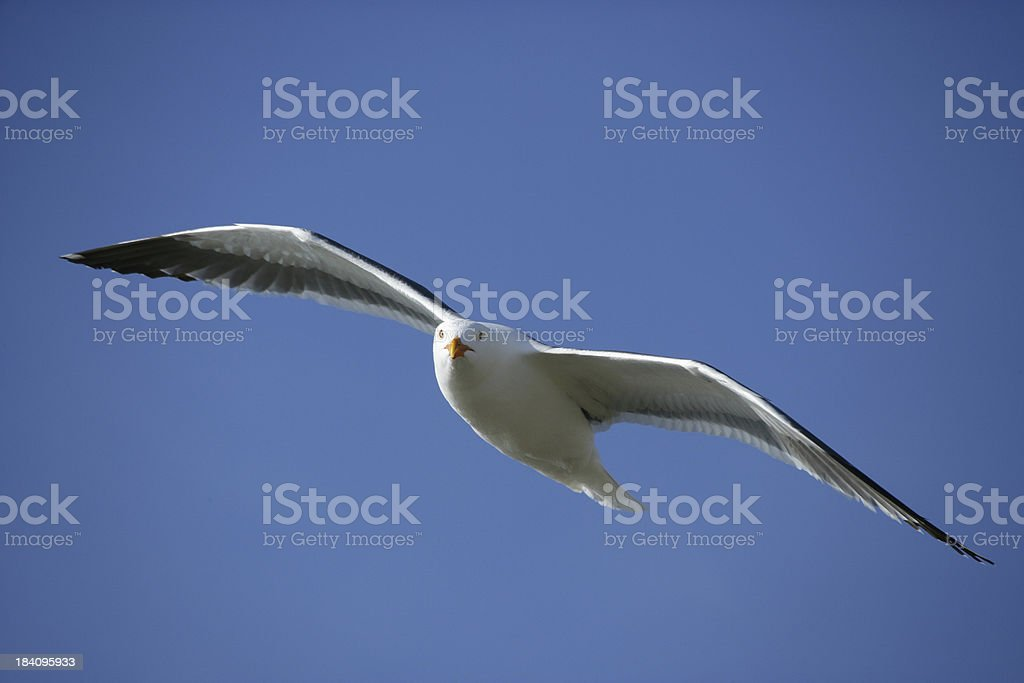 In Flight royalty-free stock photo