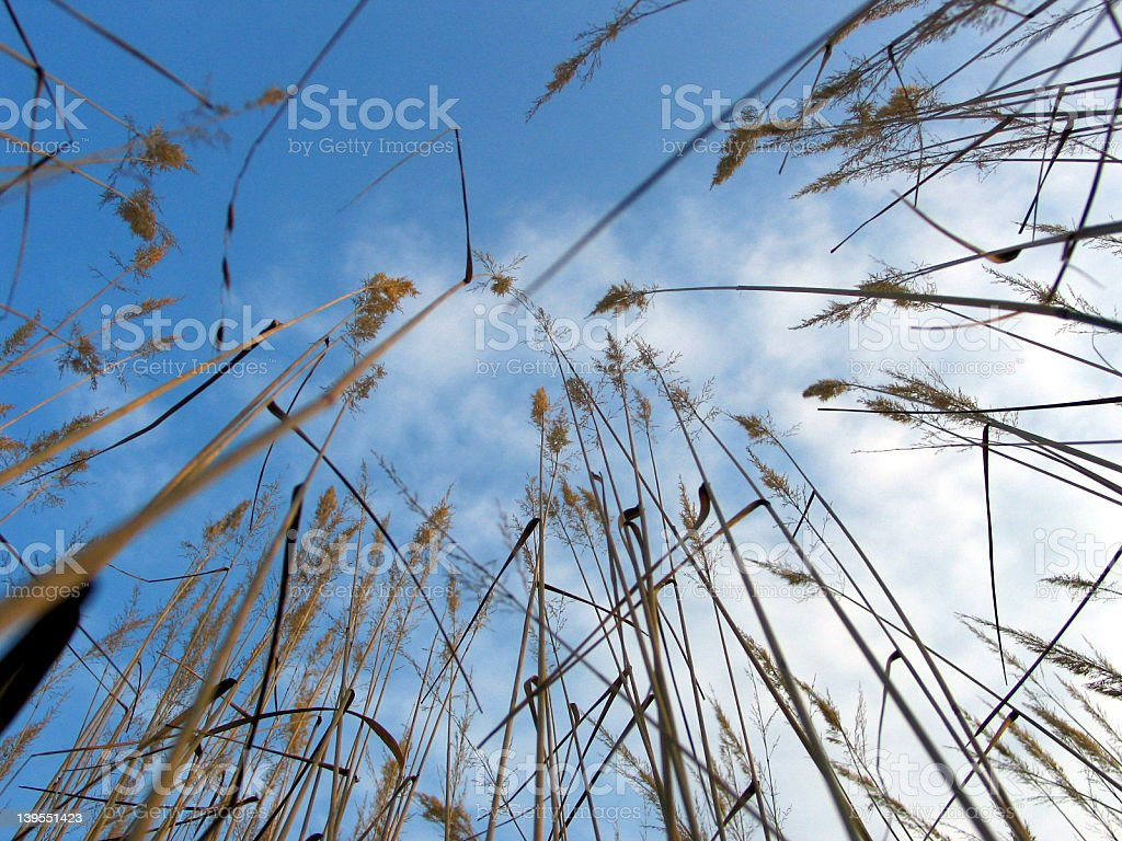 In Grass. royalty-free stock photo