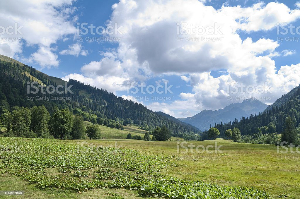 In lake Ritsa vicinities. Abkhazia. stock photo