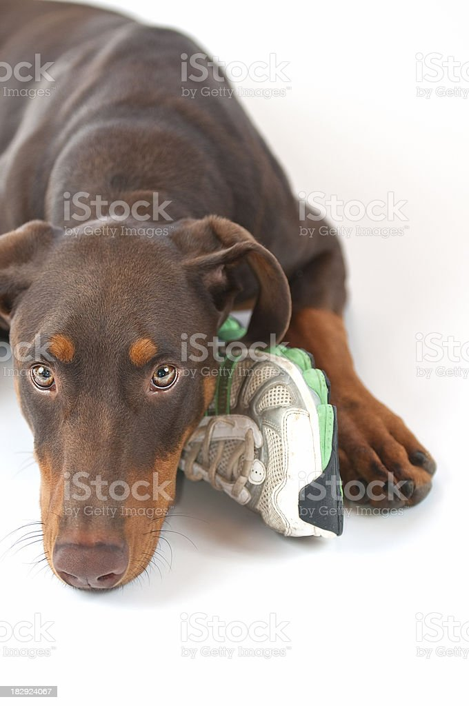 In Love with Shoe stock photo