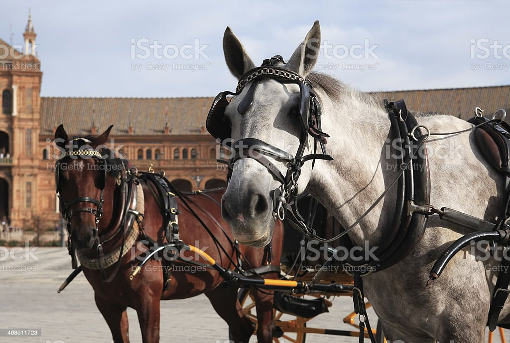 In One Harness royalty-free stock photo