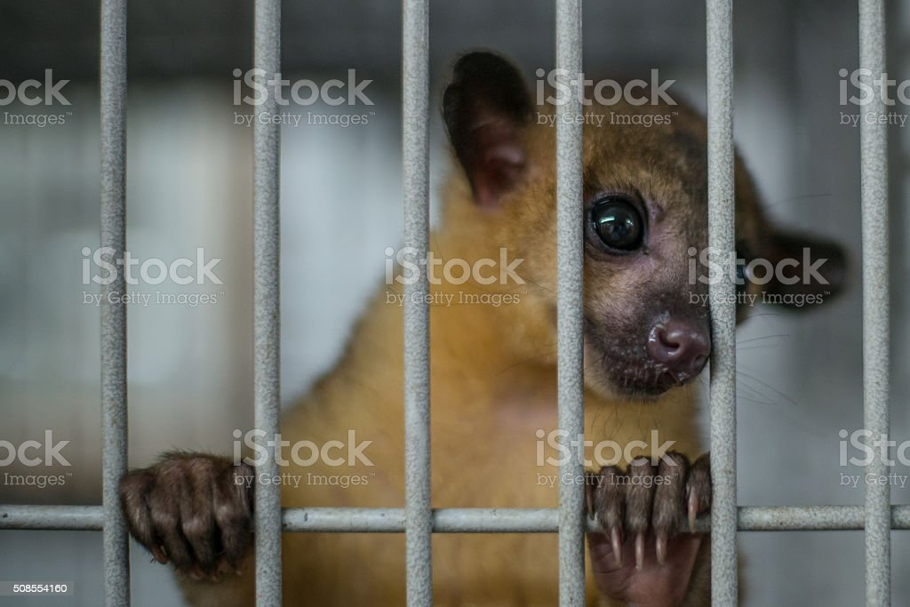 In Prison stock photo