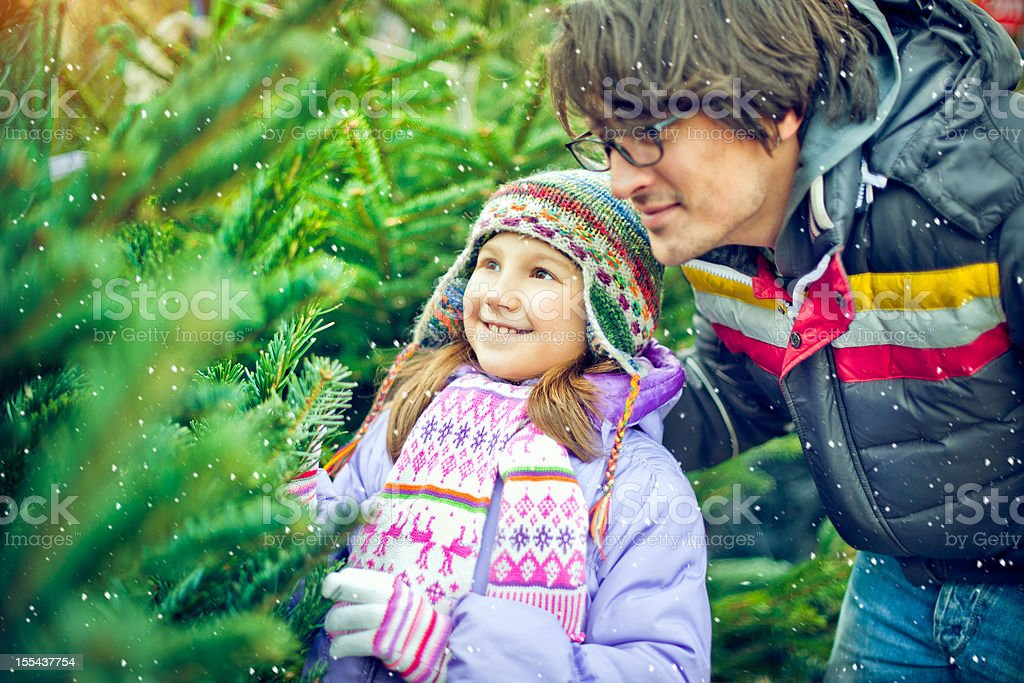 In search of perfect Christmas tree royalty-free stock photo