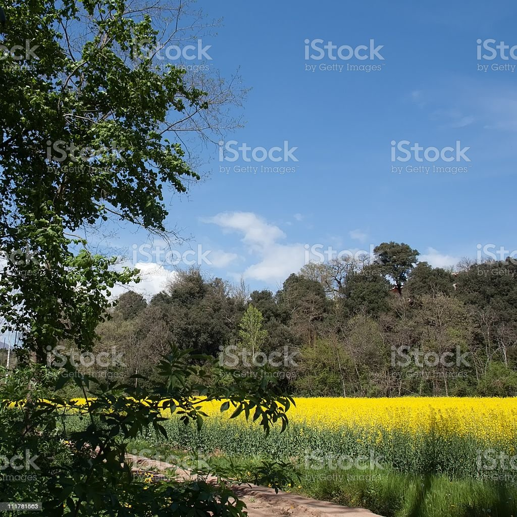 In spring royalty-free stock photo
