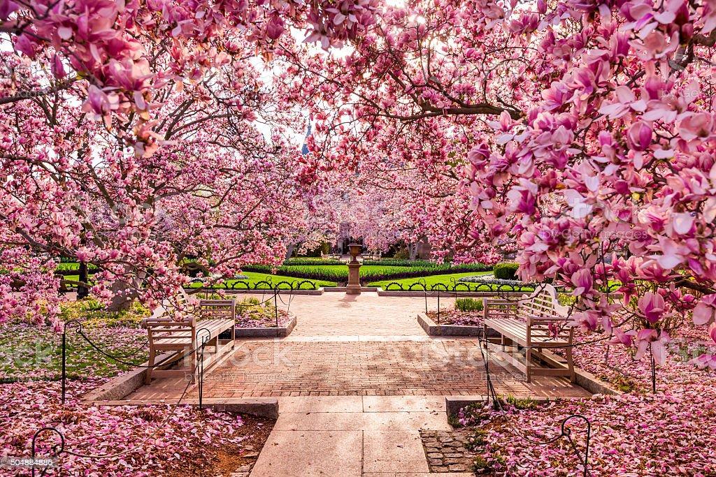 DC in Spring stock photo