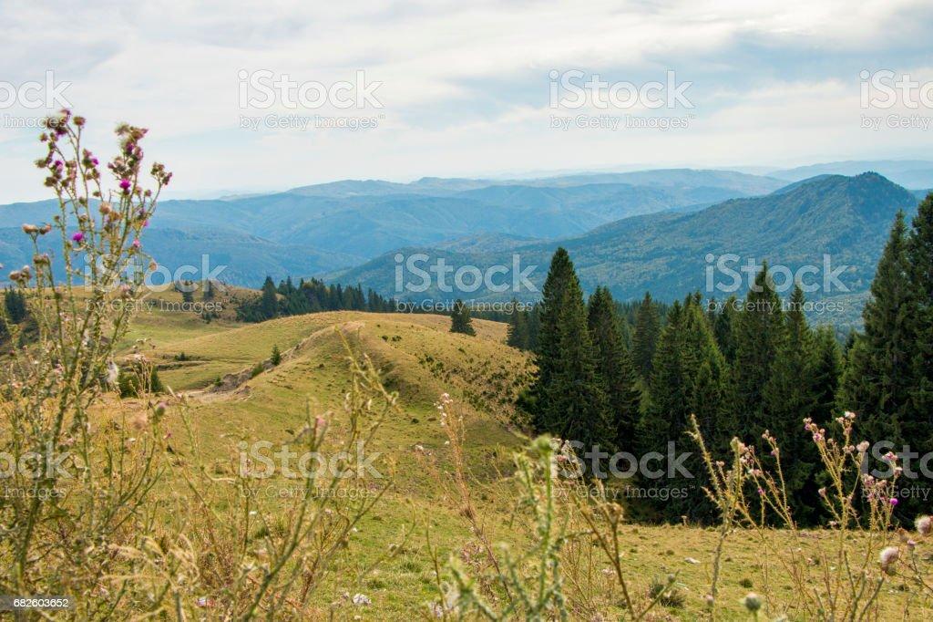 in the Bucegi Mountains stock photo