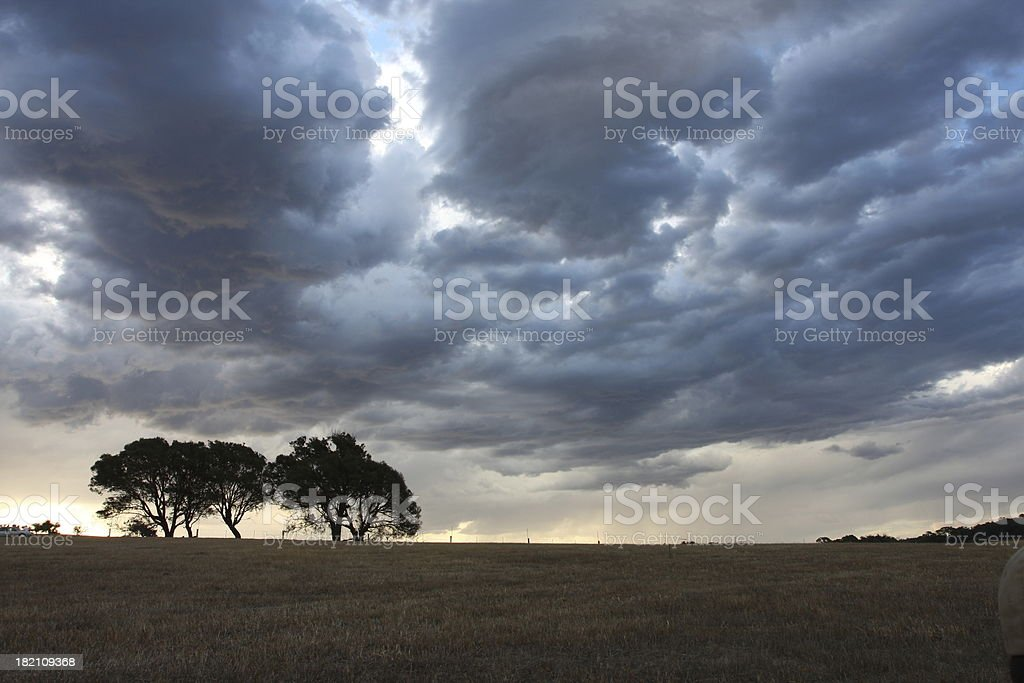 in the bush royalty-free stock photo
