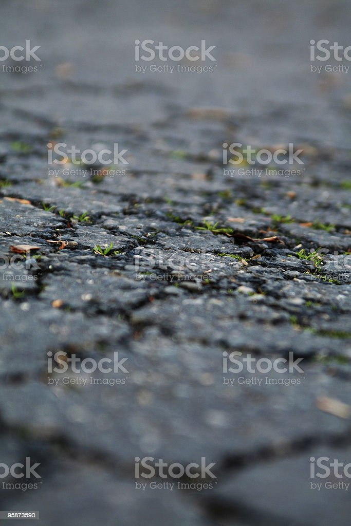 in the cracks royalty-free stock photo