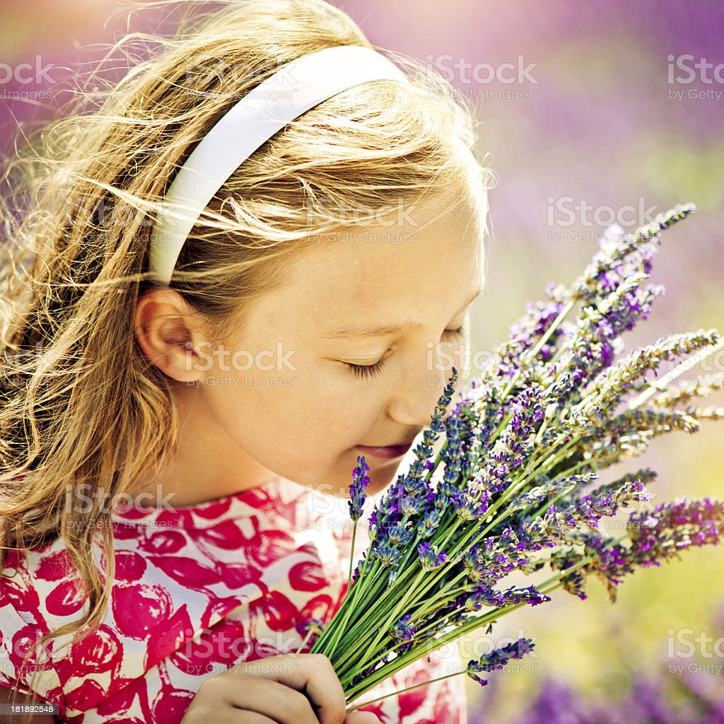 In the field of lavender royalty-free stock photo