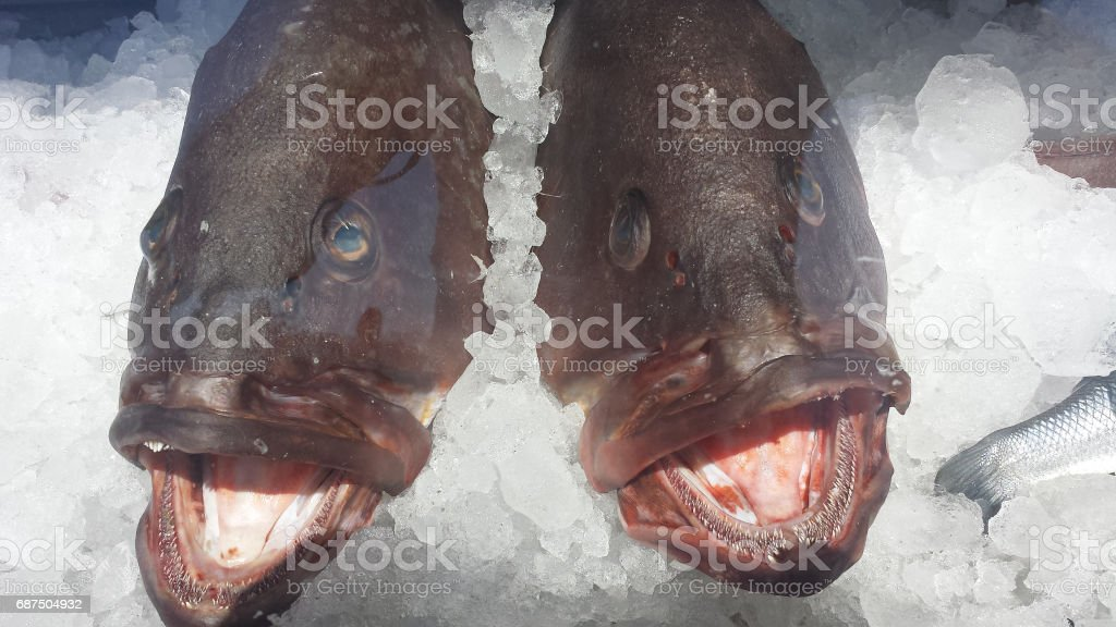 in the fish market stock photo