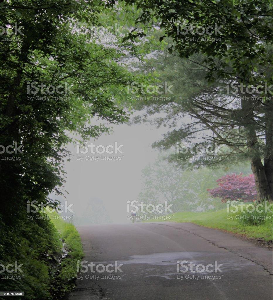 In the Fog stock photo