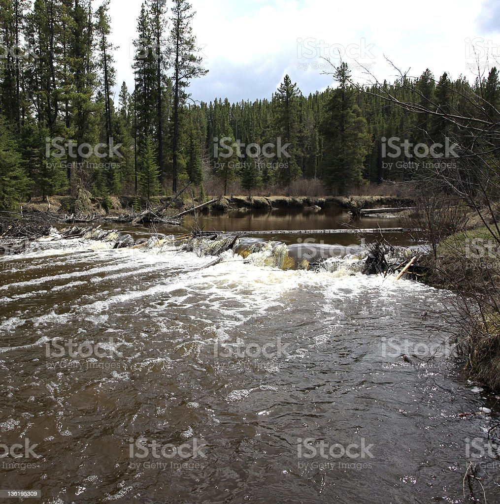 In the foothills of Alberta is a beaver dam. stock photo