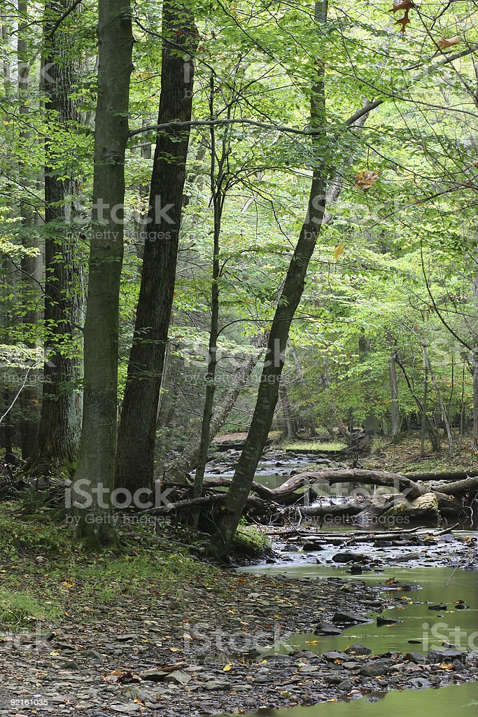 In the forest stock photo