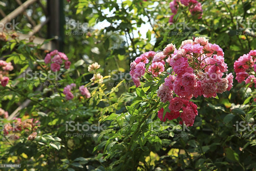 In the garden XXL royalty-free stock photo
