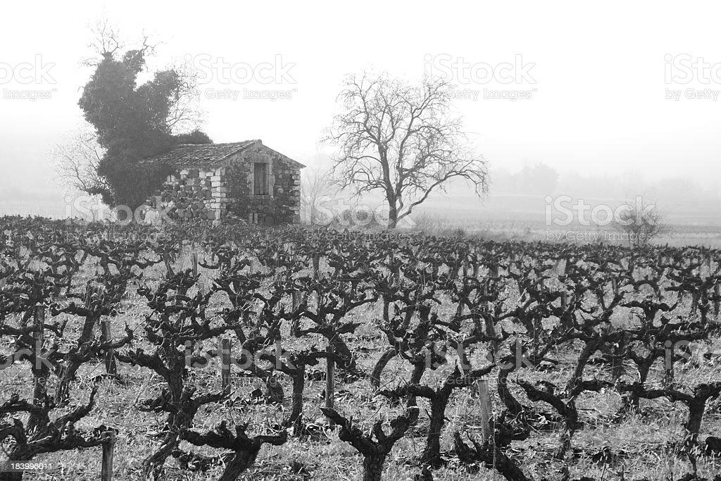 In the grape vine stock photo